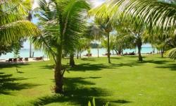 Paradise Sun