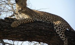 Madikwe Safari