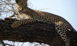 Madikwe Safari