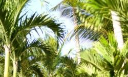 Veranda Palmar Beach