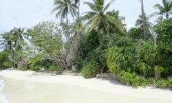 Dreamland Island