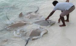 Maledivy 2018 - Dhigufaru