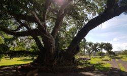 Mauricius inspekční cesta