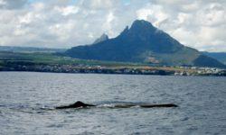 velryby na Mauriciu