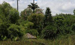 Reunion - Le Jardin d Eden