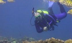 Reunion - potápění